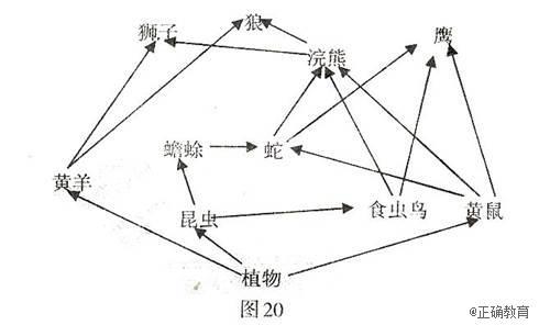 下图20是某草原生态系统的食物网简图,请据图回答.
