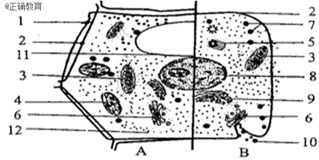 下图为动植物细胞亚显微结构模式图的部分综合,请回答图片