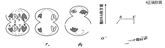 下图表示某动物细胞分裂过程部分细胞分裂图像以及中