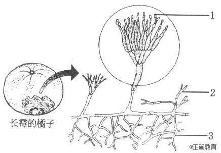 丝瓜的生长过程简笔画